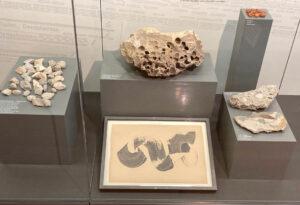 Zeitgenössische Kunst im Naturkundemuseum